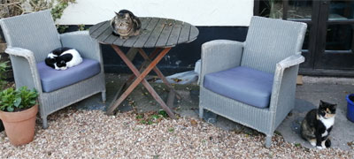 Three resident cats at The Stableyard in Bangor-on-Dee